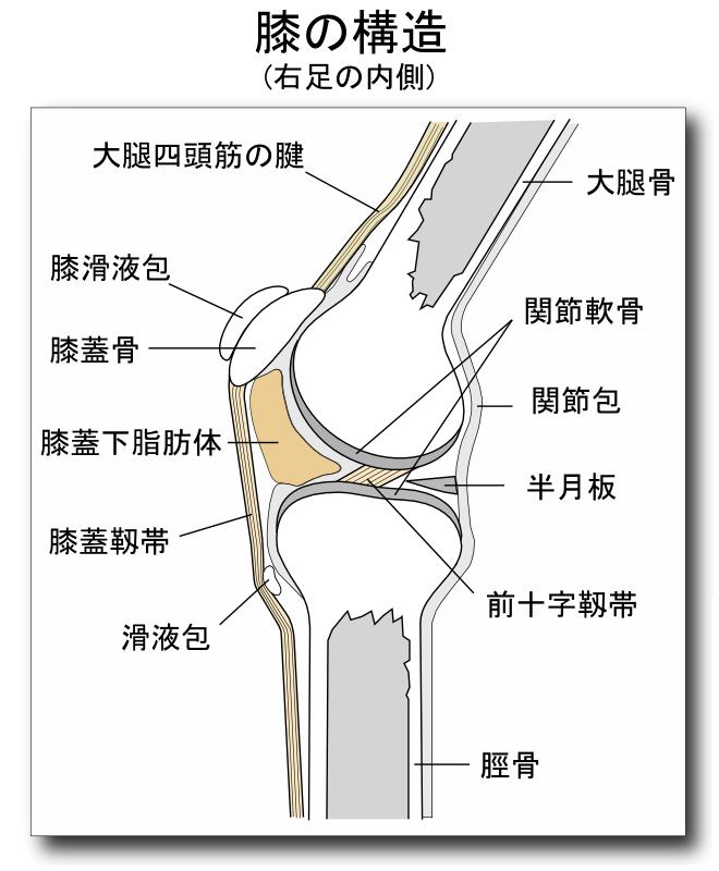 歩くと膝の内側が痛いのは、何をどうすれば良くなるのか?