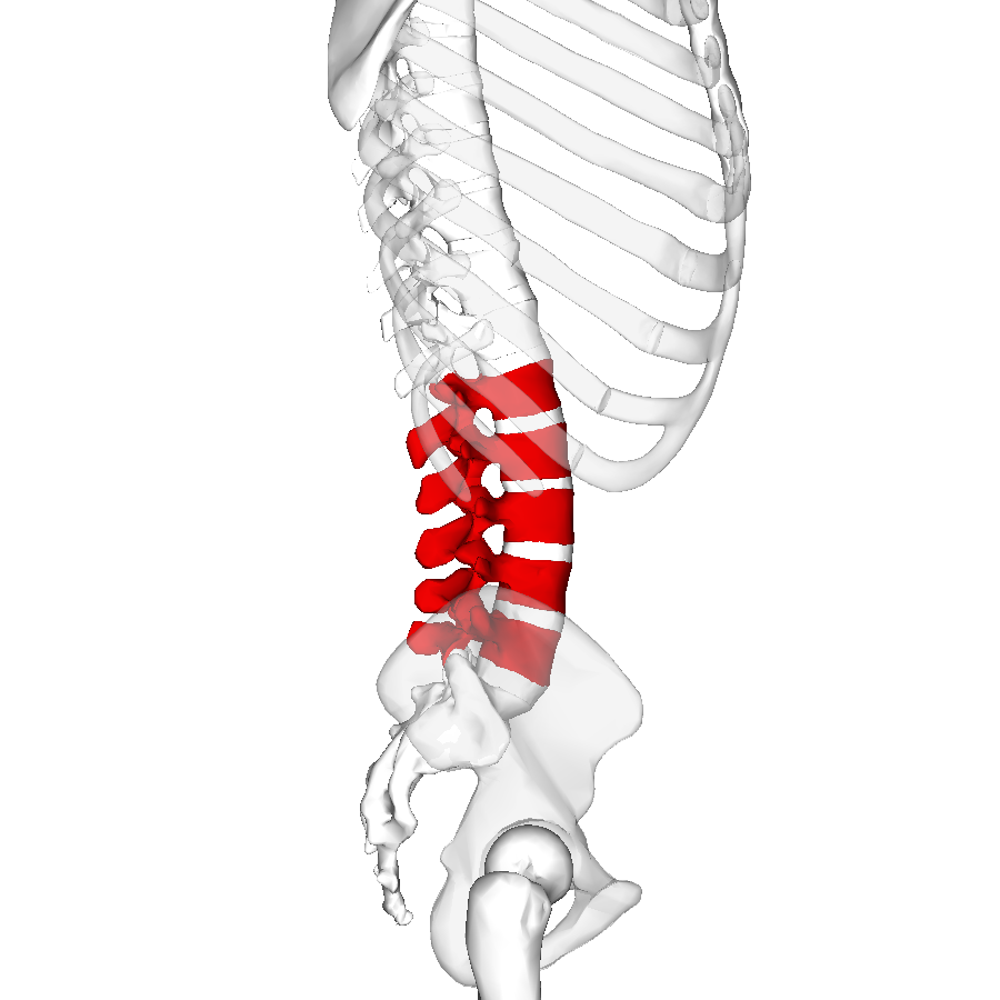 ぎっくり腰で激痛で炎症を伴っている場合、「スプラング・バック」(棘間・棘上靭帯損傷)を起こしていることが多い。