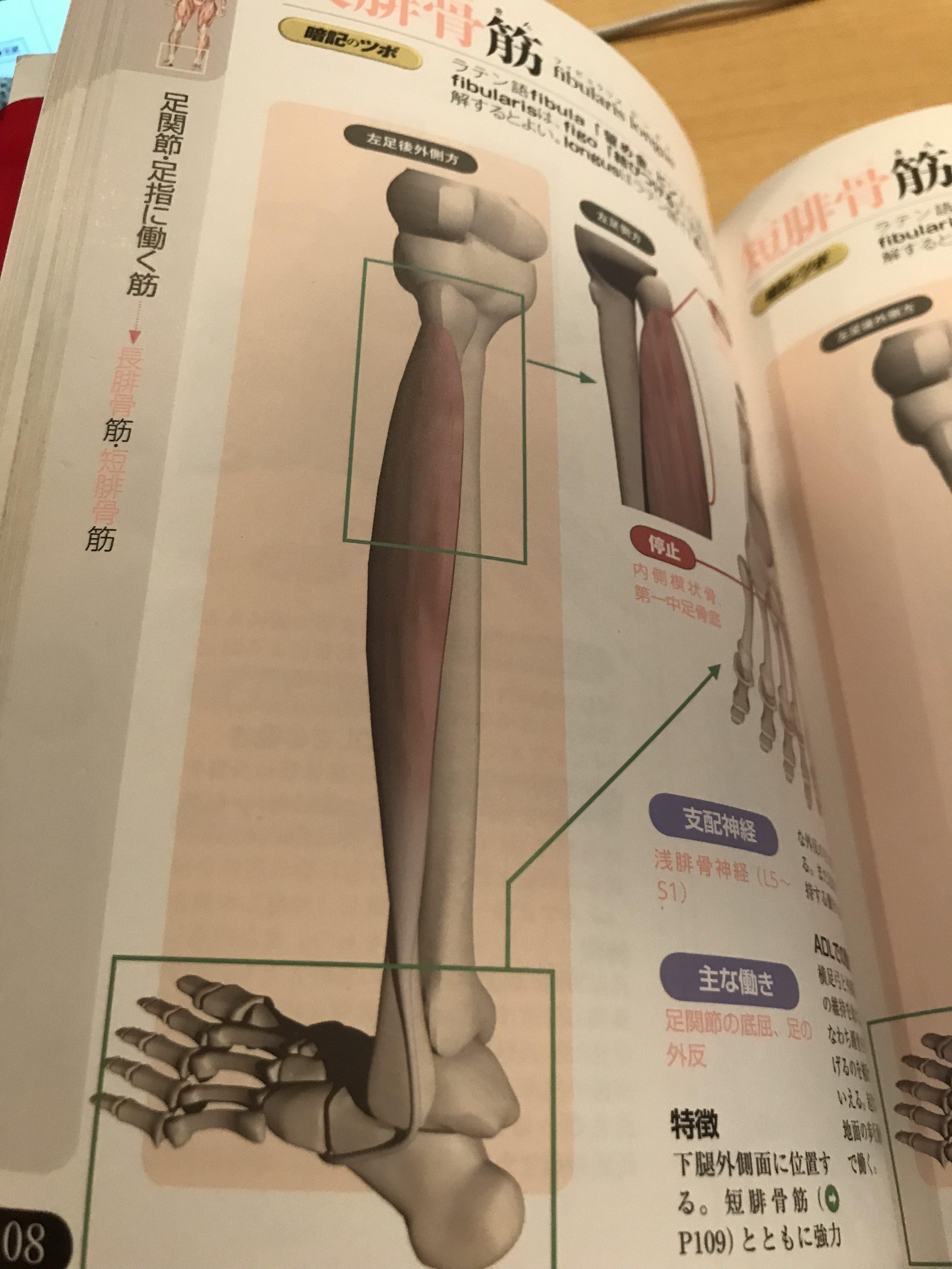 腓骨筋腱炎(外側のくるぶしが痛い、足首の外側が痛い)
