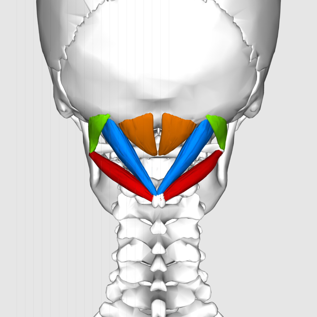 頭痛が後頭部の左側ばかりに出る方の症例