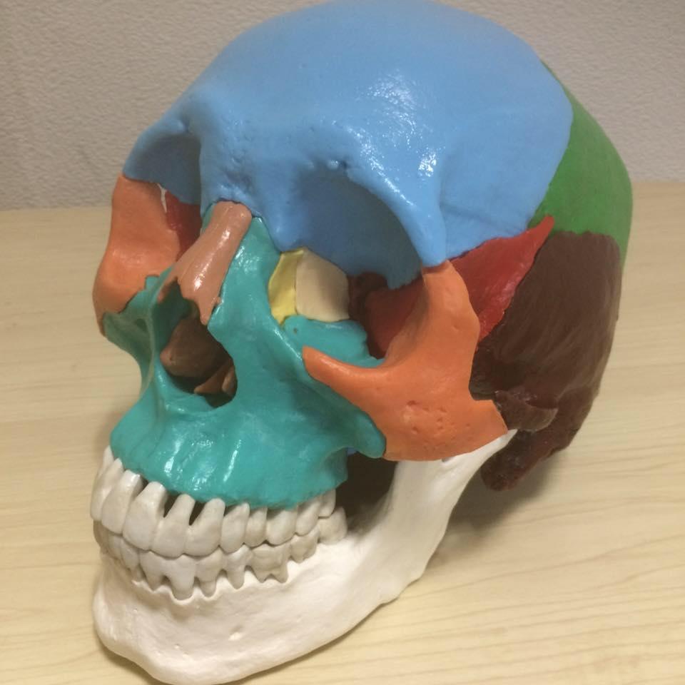 頭蓋骨の個々の骨は複雑に歪んでいる
