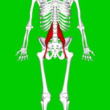 大腰筋が原因での腰痛